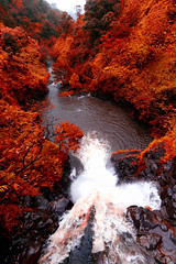 'Flowing Crimson' (JEMiguel007) Tags: falls makapipi crimson flowing waterall waterfalls jmp josephmiguel hawaii maui hana trees ocean water nikon tokina