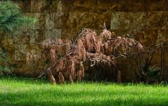 Parque Luis Muoz Rivera (SamyColor) Tags: canon50d canonefs1785 parqueluismuozmarin