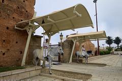 Guarded at all times (T   J ) Tags: morocco rabat fujifilm xt1 teeje fujinon1024mmf4