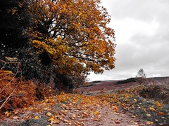 Autumnal Ilkley (seumas1991) Tags: autumn mono one shot colour leaves nature path
