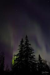 Aurora (spwasilla) Tags: aurora auroraborealis northernlights alaska night sky canon7d tokina1116mm canon stars trees spruce lights green