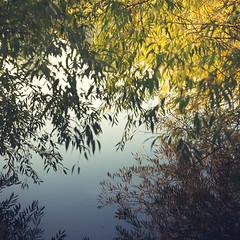 Looking Through Reflections (ChrisDale) Tags: autumn chrisdale chrismdale early golden goldenhour goldenlight gunthorpe haze light morning nottingham nottinghamshire notts october river rivertrent sun sunlight trees trent woodland