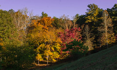 Never look down on anybody unless you're helping them up.. (knoxnc) Tags: follage afternoonsun mapletree season nature walnuttree fall d7200 red bluesky trees oaktree pasture outside fenceline ashtree woods nikon pinetree shadows ground orange fallingleaves valley landscape