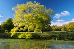 Beautiful fall (Maarten Langeveld) Tags: landgoedclingendael thehague fall