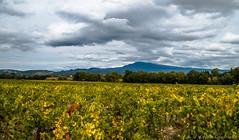 Le Ventoux depuis la route menant au Barroux (cgautriaud) Tags: vaucluse ventoux vigne vine provence cloud nuage automne autumn landscape paysage pentax k50 reflex