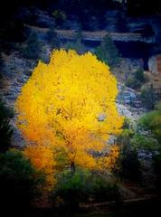 Light in autumn..!! (Olymbe) Tags: ocre amarillo arbol natura autumn otoo bosque