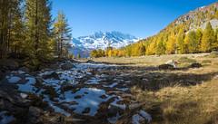 Autumn in the PNGP (mr.martino) Tags: alps mountain landscape panorama autumn fall pngp granparadiso levanne ceresole