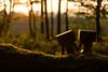 ❤️ Danbo in Love (Wenninger Johannes) Tags: danbo danboard danboardmini love danbolove nature sunset sun sonne sonnenuntergang foto fotografie photography photo linz austria österreich