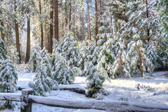 Let it Snow... (scrapping61) Tags: california winter snow forest yosemitenationalpark legacy 2012 tistheseason rockpaper scrapping61 tisexcellence daarklands trolledproud trollieexcellence pinnaclephotography poeexcellence rockpaperexcellence