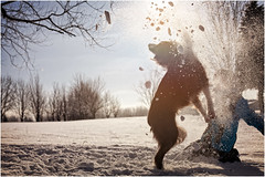 Just play. Have fun. Enjoy the winter. (SergeK ) Tags: park winter dog chien snow game fun outside exterior bc hiver explore enjoy whisky neige bordercollie parc jeu twittertuesday