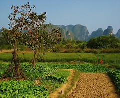 persimmons and vegetables (SM Tham) Tags: china trees vegetables countryside yangshuo farmland hills limestone persimmon karst guangxi