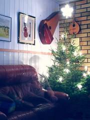 Unfinished Christmas tree and a ghost (Simon Isac) Tags: christmas tree star kummitus joulupuu