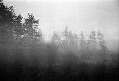 (theknark) Tags: blackandwhite fog lomography overcast 35mmfilm princeedwardisland analogue happyaccident kodaktmax400 expiredfilm selfdeveloped fujifilmnaturaclassica canoscan9000f