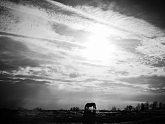 another scene off scenic bluff road... (BillsExplorations) Tags: winter blackandwhite horse clouds illinois pasture grazing bluff