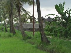 A Temple in the Rice Paddies
