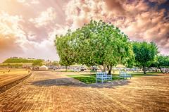 Nature in HDR, HDR fever (aRafay) Tags: nature garden natural parks hdr doha qatar natureofgod godnature hdrish