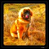 Alf Herman Refsnes 20150126_114539 (OK Gallery) Tags: dog hund jæren hå refsnes okgallery oddkhauge alfherman