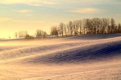 Snow hills (ankina) Tags: morning trees winter light snow field sunshine norway farm ullensaker kløfta
