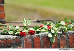 Flors en record de les víctimes