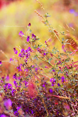 Summer feel (fotografkaa) Tags: flowers summer 50mm nikon holidays bokeh feel violet nikkor d7100 52project
