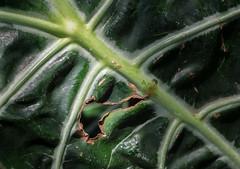 P7129621 (Mark J. Stein) Tags: plant flower nature closeup longwoodgardens 2016 photobymarkjstein photobymarkstein