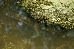 Pike waiting in ambush (Kentish Plumber) Tags: nature kent wildlife reserve visitorcentre kwt nbw boughbeech kentwildlifetrust