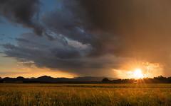 Yesterday's storm report (Dejan Hudoletnjak) Tags: sunset summer sky sun storm colors grass rain clouds landscape evening colorful warm slovenia raindrops darksky grassfield summerstorm mixofstormandsunset