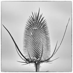 erhaben (khausp) Tags: schwarzweis unterwegs daily drnach fotografie natur pflanzen postaday