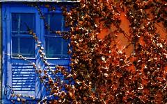Autumn in July -- otoo en julio (Roger S 09) Tags: hojas ventana pared asturias lalonja santaeulalia cabranes santolaya