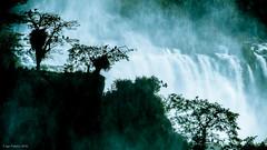 Iguaz 1 (soundmoods) Tags: trees water argentina birds brasil stream noise