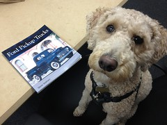Harry, at work. 33 (4s) (Mega-Magpie) Tags: usa dog pet ford america puppy book illinois harry dupage il poodle trucks 4s iphone