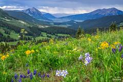 Colorado   Explored (efiske) Tags: colorado coloradomountains coloradolandscape crestedbutte washingtongulch wildflowers mountains columbine