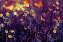 dream of butterflies (kevin_art) Tags: creation creative bokeh abstract digital