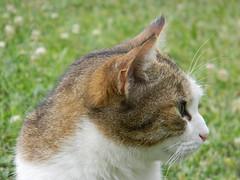 Lovely little snout (Elenagrima) Tags: animal animale gatto cat snout muso nature feline felino profilo profile