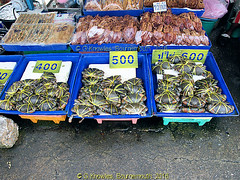 Crabs for sale on Angsila Fish Market, Chonburi Province, Thailand. (samurai2565) Tags: chonburi chonburicity chonburiprovince banglamung floatingmarketsinthailand muangchonburi sukhumvitroad pattayafloatingmarket beachroad festivalshoppingmall walkingstreet jomtien