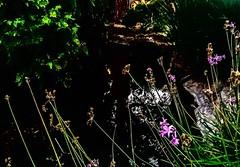 #iphonephotography #pond #outdoorgarden #garden #ilovegarden #socialmedia #picoftheday (tonyriveraphotography) Tags: iphonephotography pond outdoorgarden garden ilovegarden socialmedia picoftheday