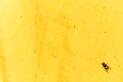 una mosca sola (mr. txutis) Tags: yellow fly minimalism nikon navarra nafarroa amarillo mosca soledad espacionegativo