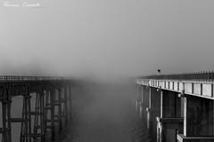 (Drugantib.us) Tags: italia laquila abruzzo bellabruzzo lago lake campotosto ponte ponti bridge bridges nebbia fog acqua water strada street cielo sky bianco e nero blackandwhite
