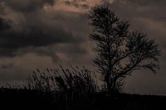 Nuit (thierry anselmier) Tags: canon eos 450 eos450 nuit night noiretblanc blackandwhite arbre tree yourbestoftoday outdoor sky landscape