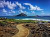 Pathways (jcc55883) Tags: hawaii oahu waimanalo makapuu makapuubeach ocean sky clouds pacificocean rabbitisland pathway horizon ipad ipadair
