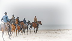 let us have a ride to infinity (micagoto) Tags: beach strand pferde horses horse pferd ausritt reiten ride riding darss dars ahrenshoop ostsee