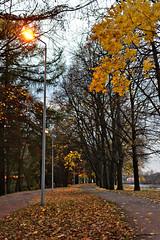 Quite Evening (kanyck) Tags: autumn sigma 1835 nikon d7200 dusk