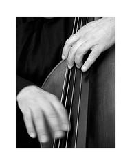 9-contrabass (Roberto Gramignoli) Tags: blackandwite bw musica music jazz mani hands play suonare contrabass contrabbasso strumentimusicali musicintruments instruments
