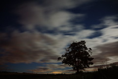 I am Groot (nancy II-brb) Tags: tree silhouette nightsky moonlitclouds start racing movement milnathort scotland autumn 2016