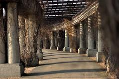 Pergola (Grzesiek.) Tags: pergola wrocaw wrocla column architecture outdoor