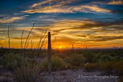 The Clouds A Glow At Sunset  GAL9967 2016-10-16 Sunset (playful_i) Tags: picachopeak statepark cactus evening horizon night park saguaro sun sunset
