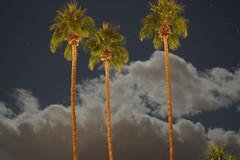 Kalifornien_2014___DSC04022 (Analog 6x6 etc.) Tags: california palmsprings nachtaufnahme kalifornien canon11850mmltm
