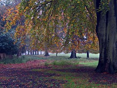 The Park of Dreams (Dazzygidds) Tags: nottingham wollatonpark beechtrees gorgeoustrees autumnalbeauty maturebeechtrees mistyintrusion