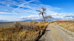 dead tree & Grand mesa! (Eve Photography By JC Clemens) Tags: eve blue sky snow storm tree fall clouds dead photography colorado skies farm samsung grand delta dirt galaxy jc roads plains mesa clemens s5 platinumheartaward