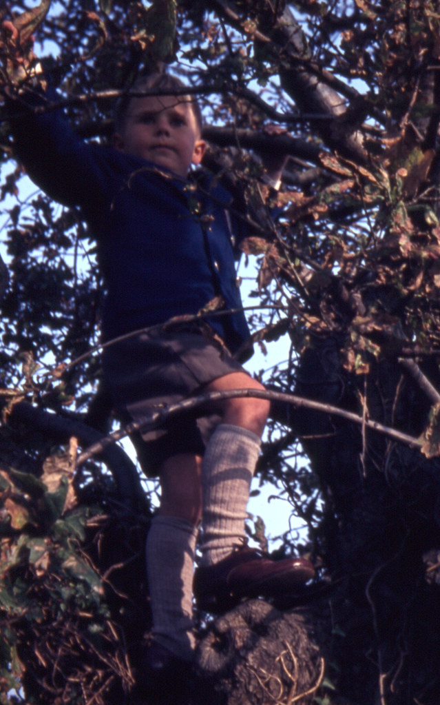 Best Shoes For Tree Climbing